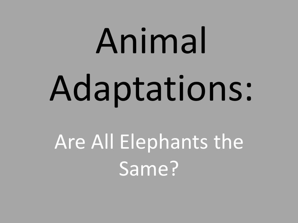 Animal Adaptations: Are All Elephants the Same?