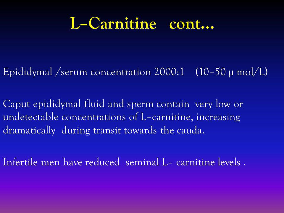 L–Carnitine cont… Epididymal /serum concentration 2000:1 (10–50 µ mol/L) Caput epididymal fluid and sperm contain very low or undetectable concentrations of L–carnitine, increasing dramatically during transit towards the cauda.
