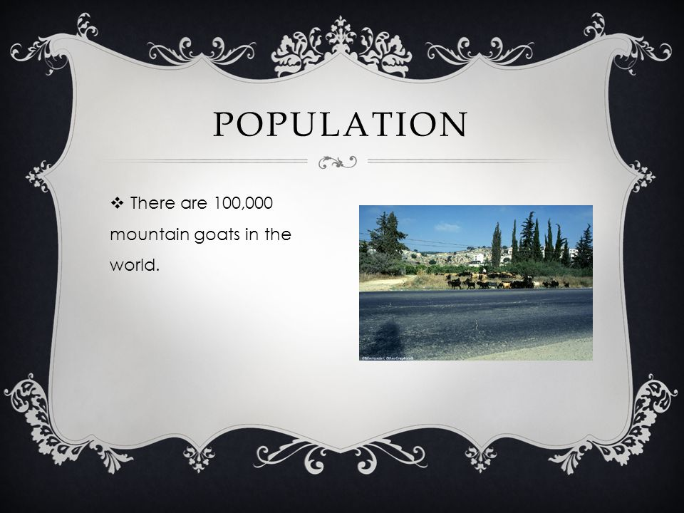 There are 100,000 mountain goats in the world. POPULATION