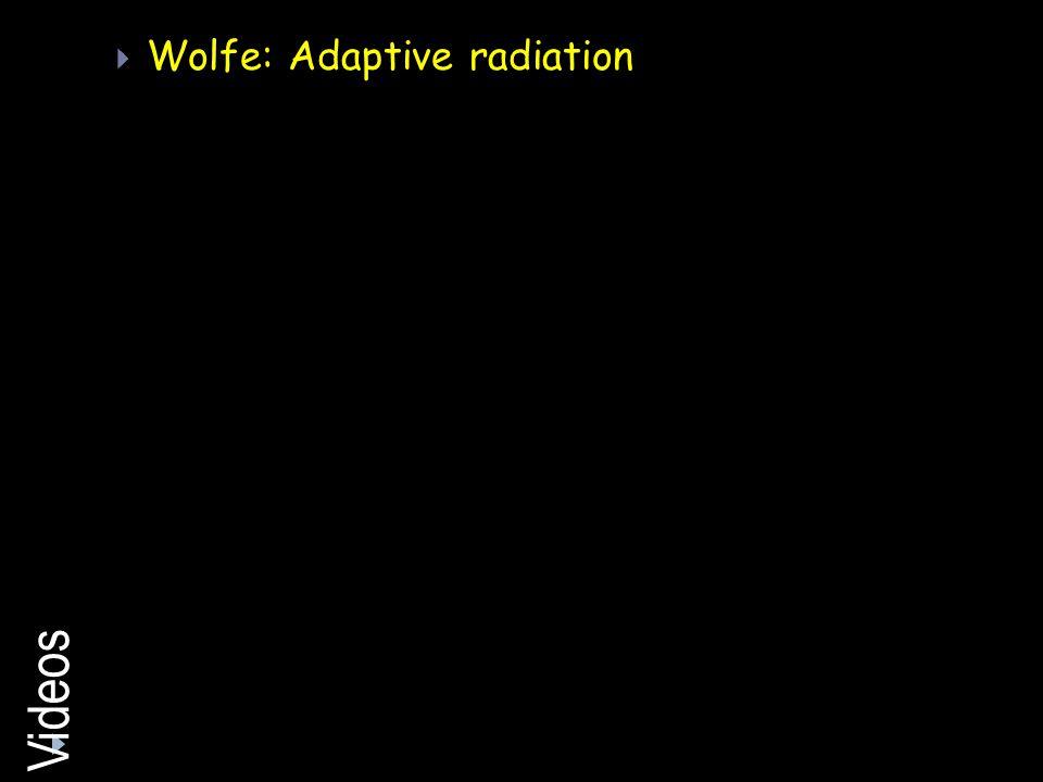 Videos Wolfe: Adaptive radiation