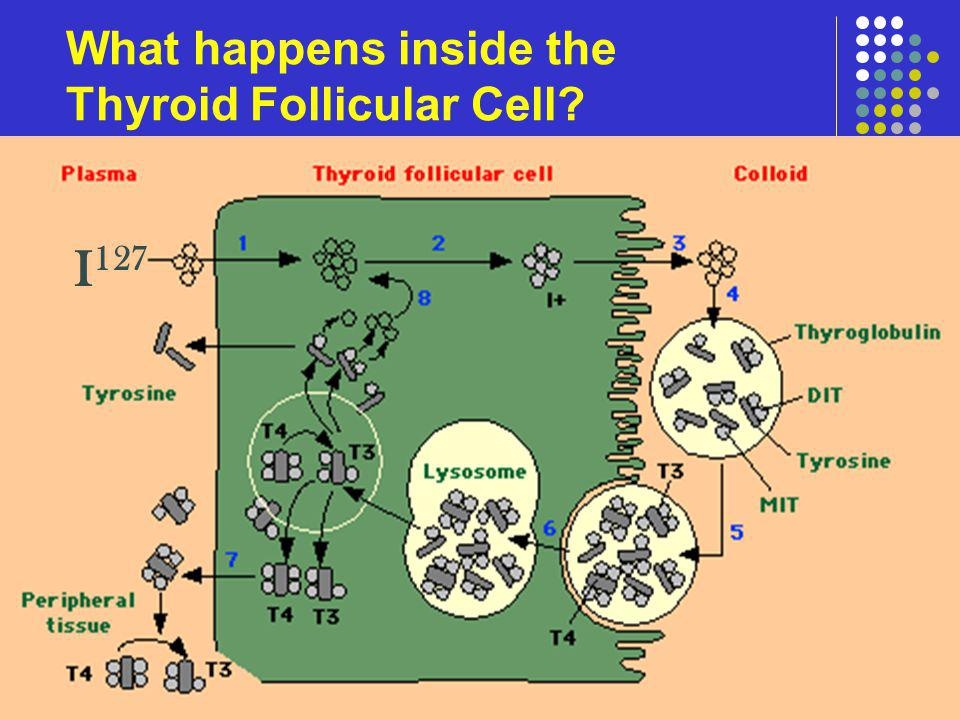 What happens inside the Thyroid Follicular Cell? I 127
