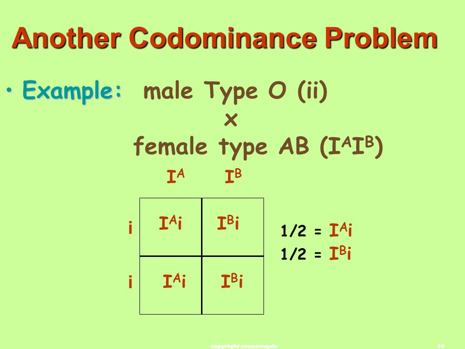 10 Another Codominance Problem Example:Example: male Type O (ii) x female type AB (I A I B ) IAiIAiIBiIBi IAiIAiIBiIBi 1/2 = I A i 1/2 = I B i i IAIA