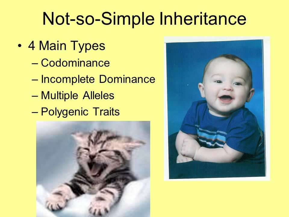 Not-so-Simple Inheritance 4 Main Types –Codominance –Incomplete Dominance –Multiple Alleles –Polygenic Traits
