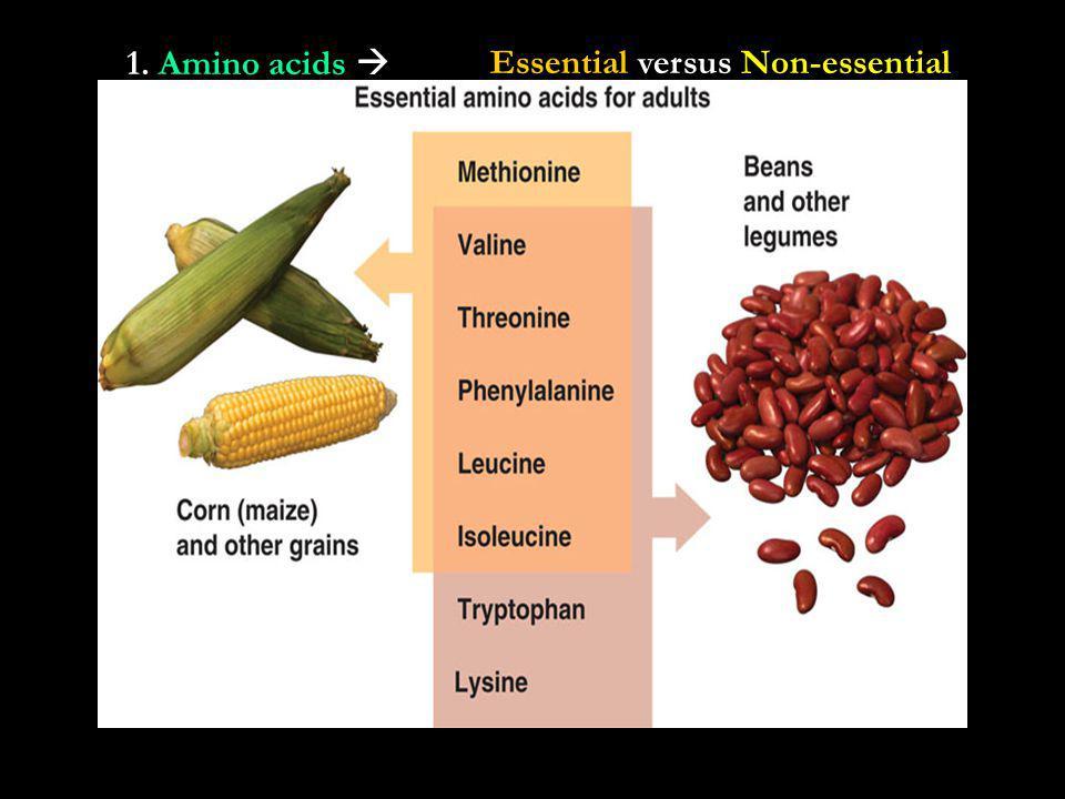 1. Amino acids Essential versus Non-essential