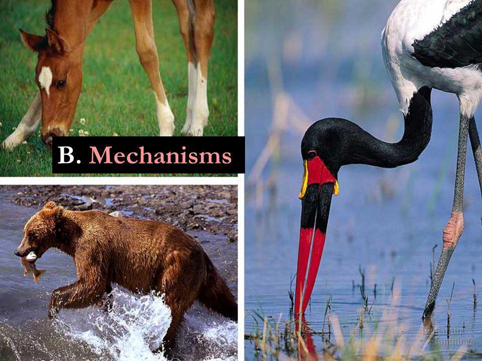 B. Mechanisms