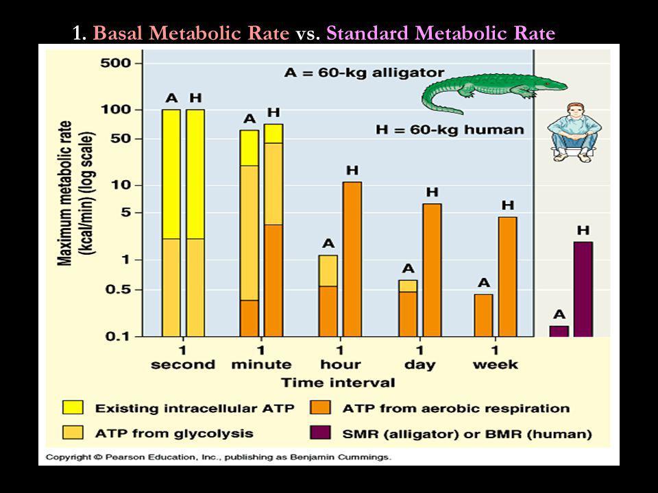 1. Basal Metabolic Rate vs. Standard Metabolic Rate