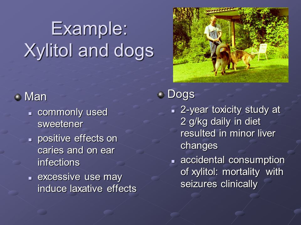 Example: Xylitol and dogs Man commonly used sweetener commonly used sweetener positive effects on caries and on ear infections positive effects on caries and on ear infections excessive use may induce laxative effects excessive use may induce laxative effects Dogs 2-year toxicity study at 2 g/kg daily in diet resulted in minor liver changes accidental consumption of xylitol: mortality with seizures clinically