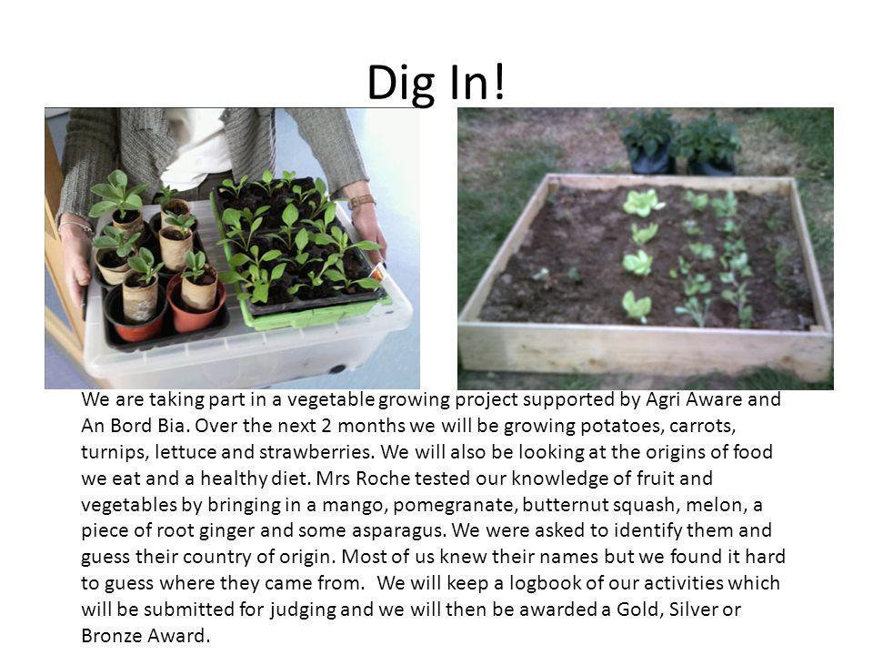 Dig In. We are taking part in a vegetable growing project supported by Agri Aware and An Bord Bia.