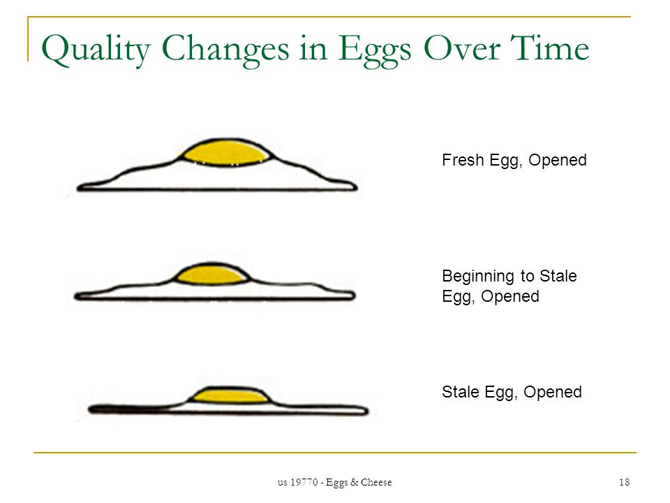 us 19770 - Eggs & Cheese 18 Quality Changes in Eggs Over Time Fresh Egg, Opened Beginning to Stale Egg, Opened Stale Egg, Opened