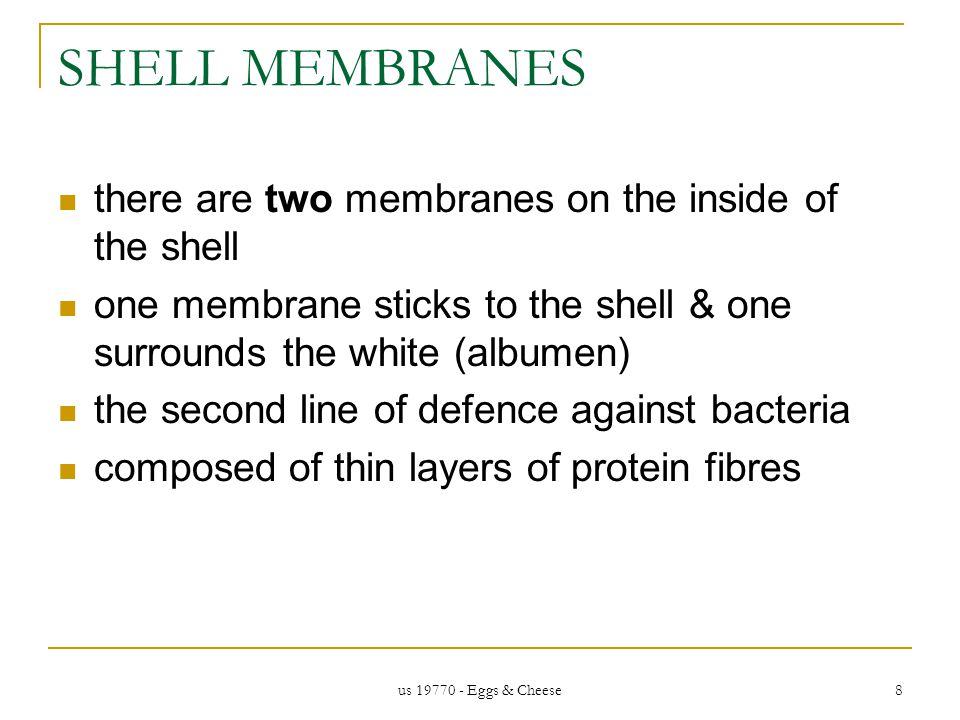 us 19770 - Eggs & Cheese 8 SHELL MEMBRANES there are two membranes on the inside of the shell one membrane sticks to the shell & one surrounds the white (albumen) the second line of defence against bacteria composed of thin layers of protein fibres