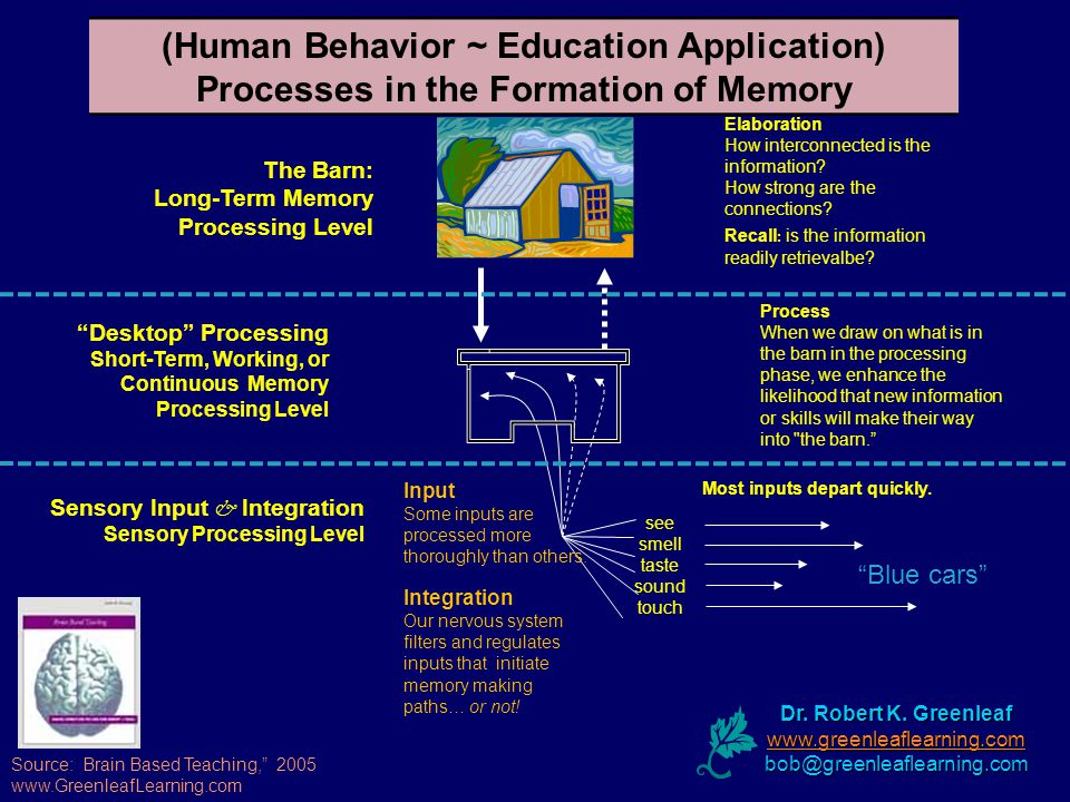 (Human Behavior ~ Education Application) Processes in the Formation of Memory see smell taste sound touch Most inputs depart quickly.