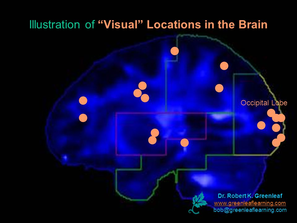 Dr. Robert K. Greenleaf www.greenleaflearning.com bob@greenleaflearning.com Illustration of Visual Locations in the Brain Occipital Lobe