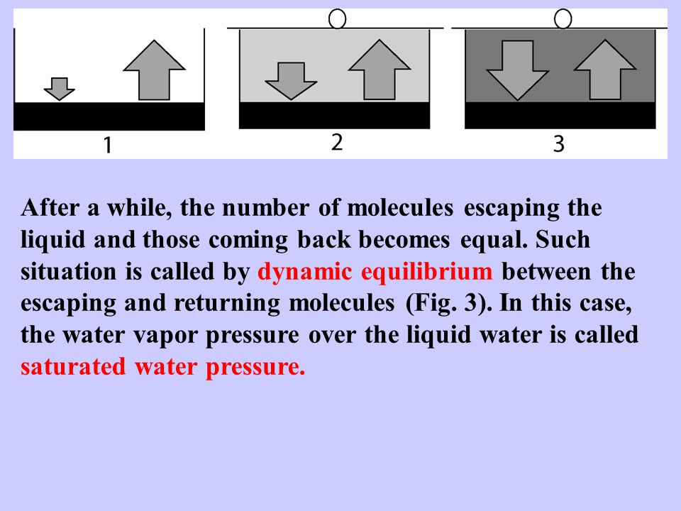 After a while, the number of molecules escaping the liquid and those coming back becomes equal.