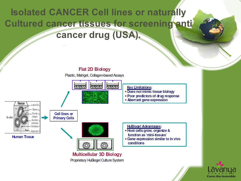Isolated CANCER Cell lines or naturally Cultured cancer tissues for screening anti cancer drug (USA).