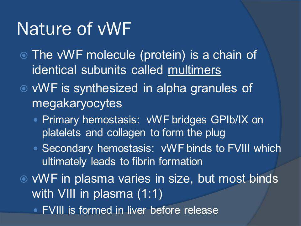 Nature of vWF The vWF molecule (protein) is a chain of identical subunits called multimers vWF is synthesized in alpha granules of megakaryocytes Primary hemostasis: vWF bridges GPIb/IX on platelets and collagen to form the plug Secondary hemostasis: vWF binds to FVIII which ultimately leads to fibrin formation vWF in plasma varies in size, but most binds with VIII in plasma (1:1) FVIII is formed in liver before release