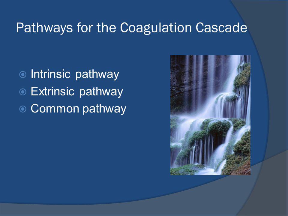 Pathways for the Coagulation Cascade Intrinsic pathway Extrinsic pathway Common pathway