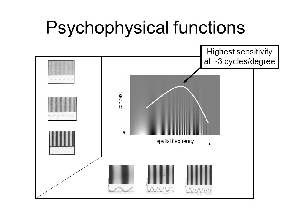 Psychophysical functions contrast spatial frequency Highest sensitivity at ~3 cycles/degree