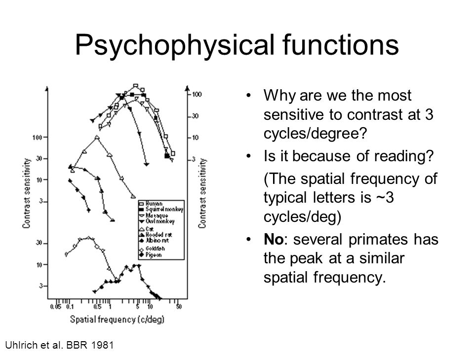 Psychophysical functions Why are we the most sensitive to contrast at 3 cycles/degree.