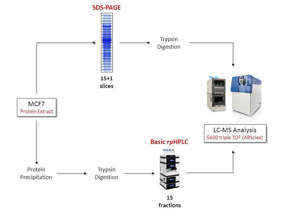15+1 slices SDS-PAGE Protein Precipitation Trypsin Digestion 15 fractions Basic rpHPLC LC-MS Analysis 5600 triple TOF (ABSciex) LC-MS Analysis 5600 triple TOF (ABSciex) MCF7 Protein Extract MCF7 Protein Extract