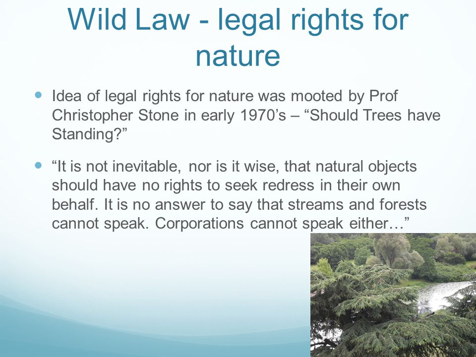 Wild Law - legal rights for nature Idea of legal rights for nature was mooted by Prof Christopher Stone in early 1970s – Should Trees have Standing.