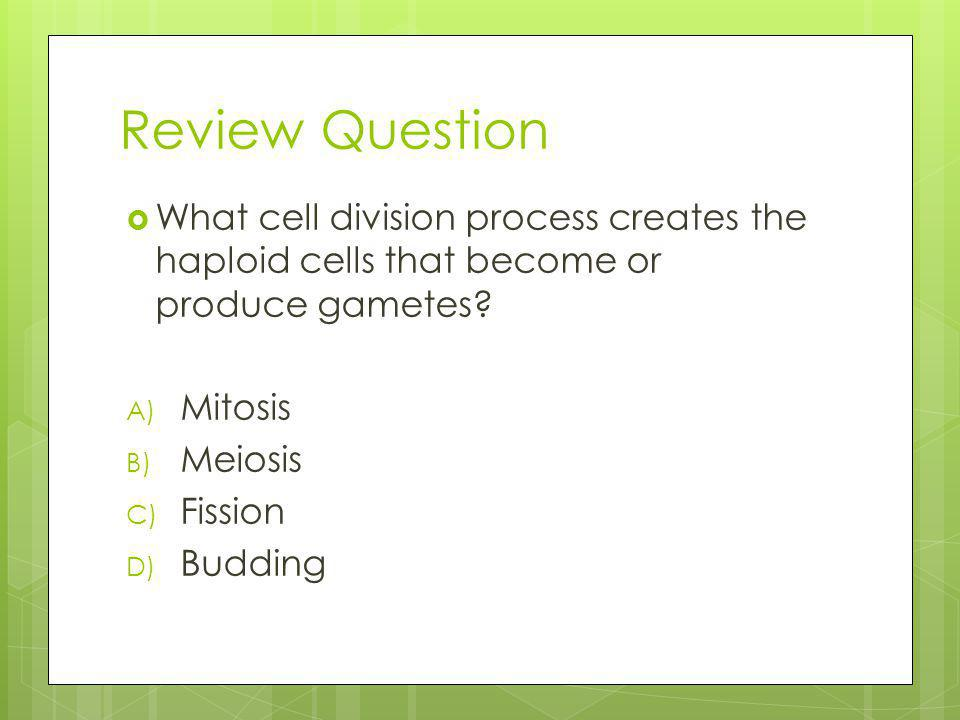 Review Question What cell division process creates the haploid cells that become or produce gametes.