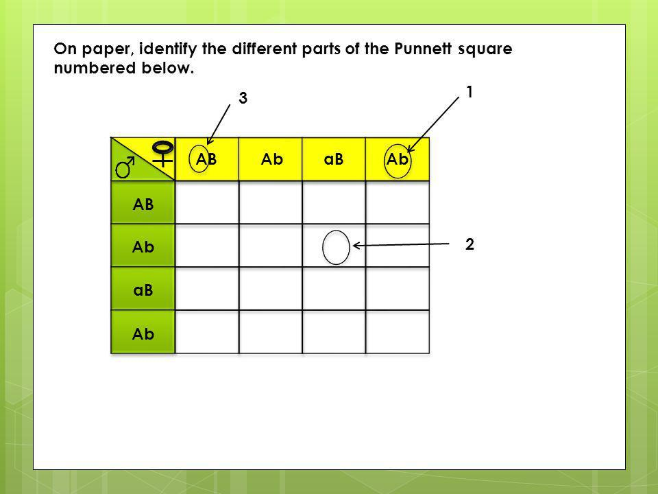 On paper, identify the different parts of the Punnett square numbered below.