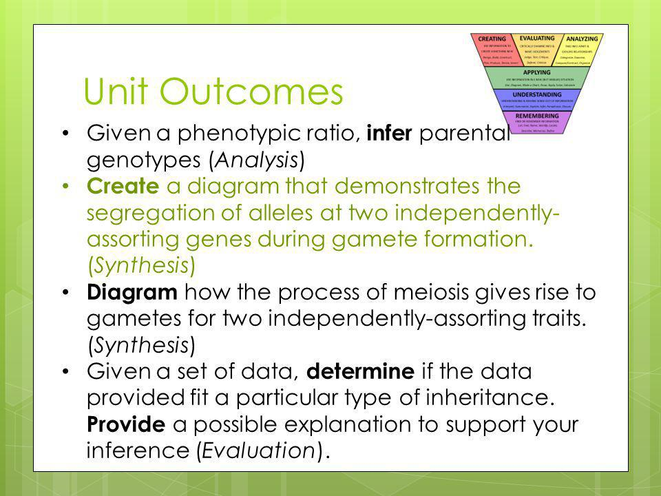 Unit Outcomes Given a phenotypic ratio, infer parental genotypes (Analysis) Create a diagram that demonstrates the segregation of alleles at two independently- assorting genes during gamete formation.