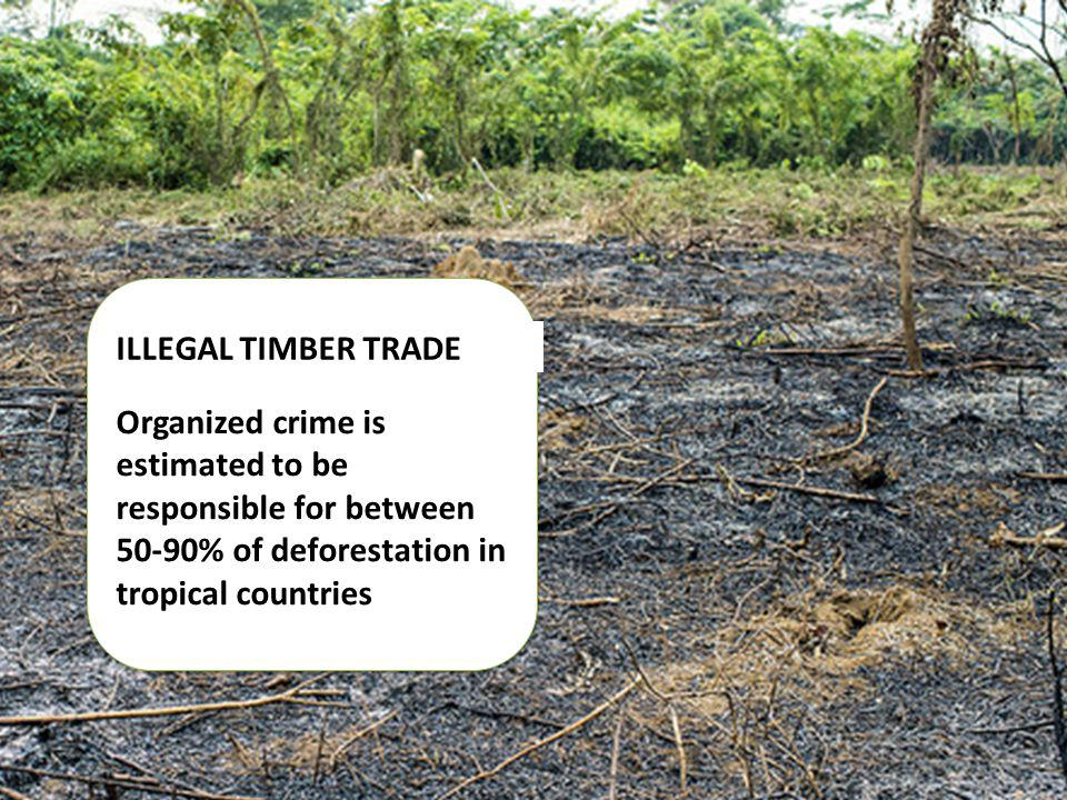 ILLEGAL TIMBER TRADE Organized crime is estimated to be responsible for between 50-90% of deforestation in tropical countries