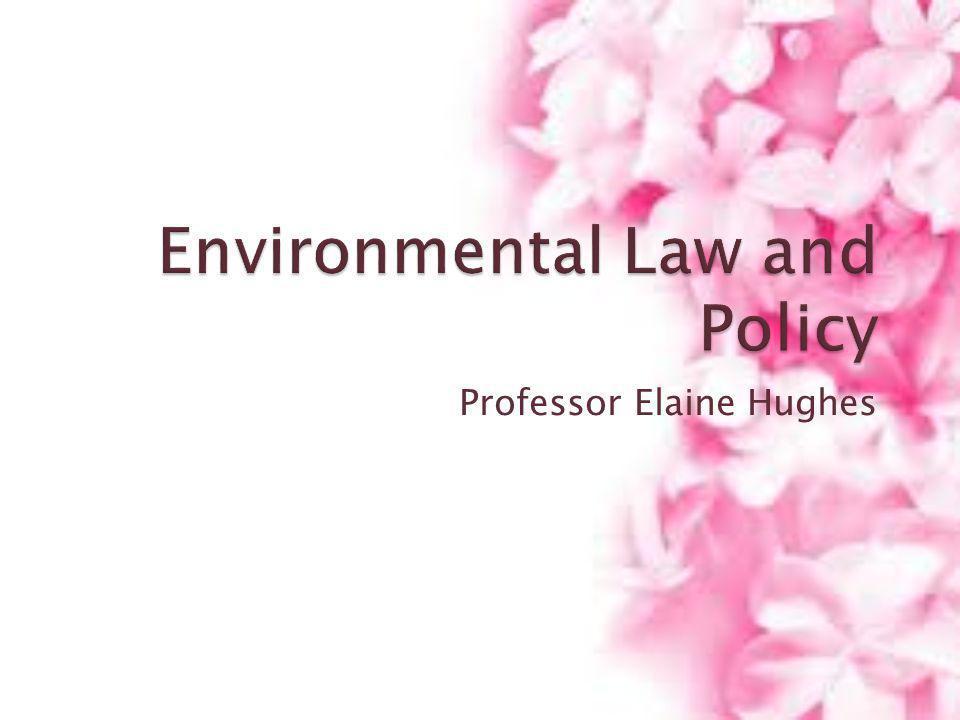 Professor Elaine Hughes