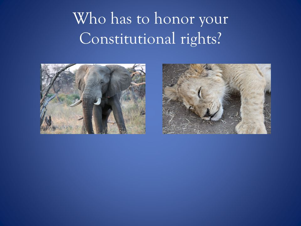 Who has to honor your Constitutional rights
