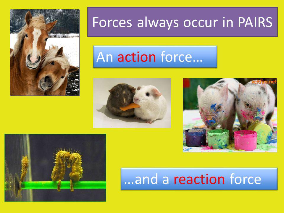 Forces always occur in PAIRS An action force… …and a reaction force