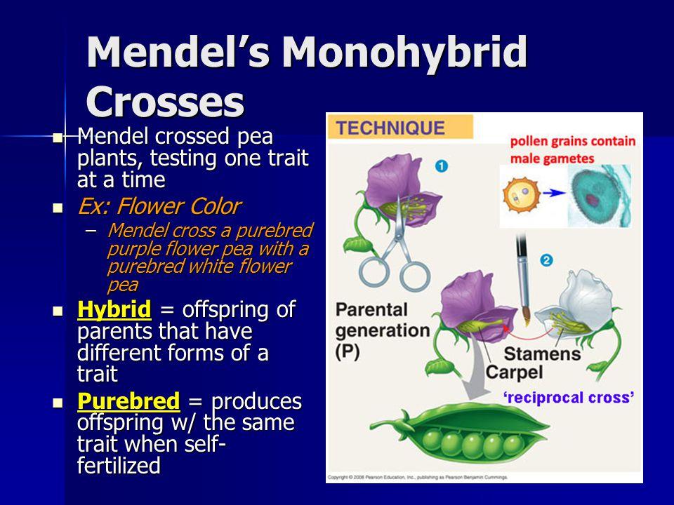 Mendels Monohybrid Crosses Mendel crossed pea plants, testing one trait at a time Mendel crossed pea plants, testing one trait at a time Ex: Flower Co