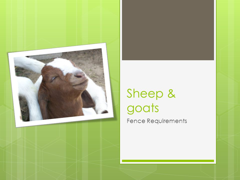 Sheep & goats Fence Requirements