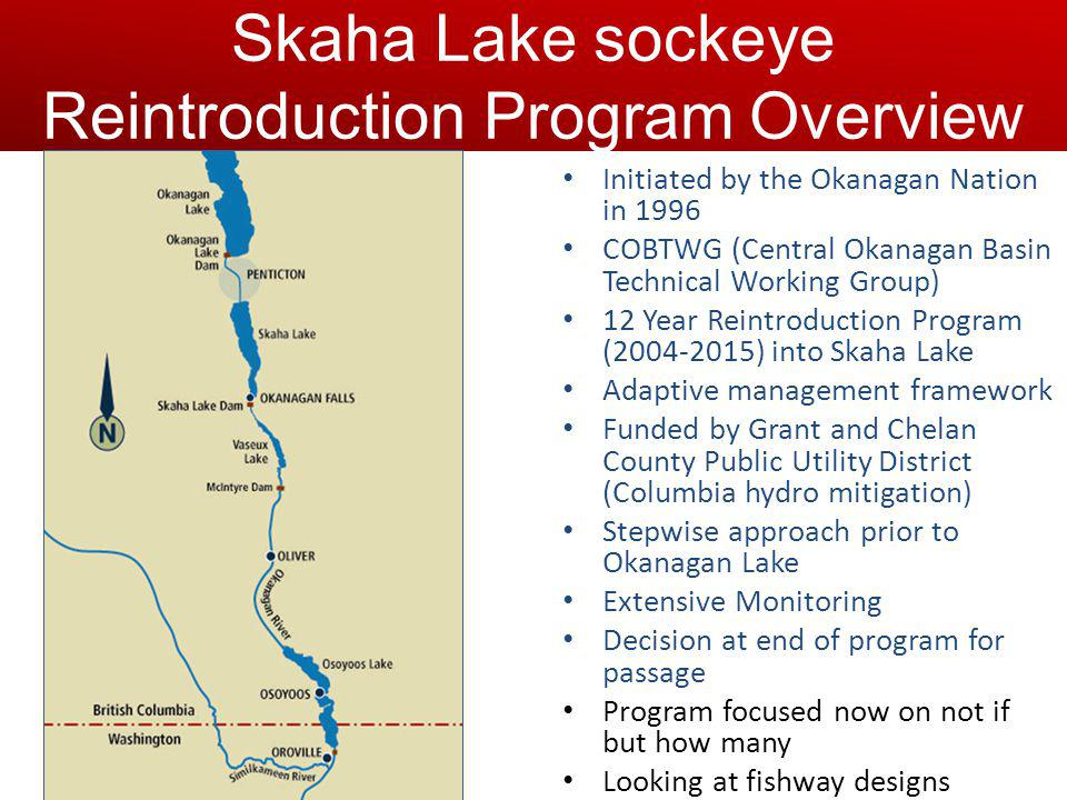 Initiated by the Okanagan Nation in 1996 COBTWG (Central Okanagan Basin Technical Working Group) 12 Year Reintroduction Program (2004-2015) into Skaha Lake Adaptive management framework Funded by Grant and Chelan County Public Utility District (Columbia hydro mitigation) Stepwise approach prior to Okanagan Lake Extensive Monitoring Decision at end of program for passage Program focused now on not if but how many Looking at fishway designs Skaha Lake sockeye Reintroduction Program Overview