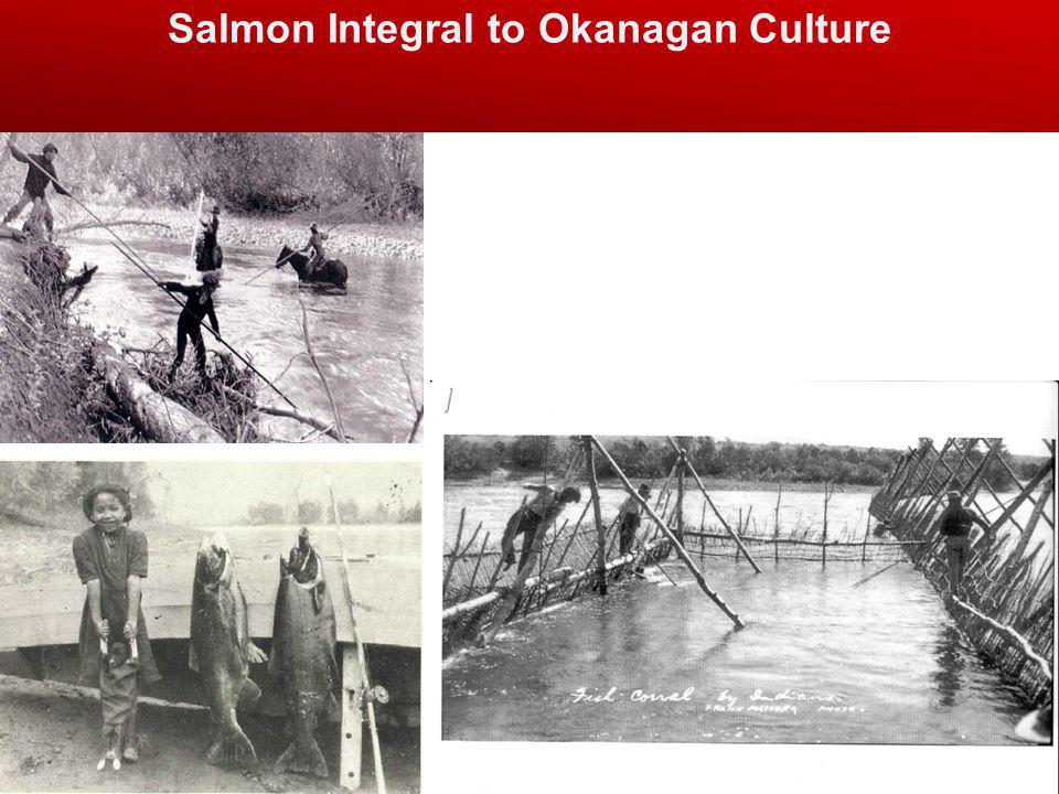 Salmon Integral to Okanagan Culture