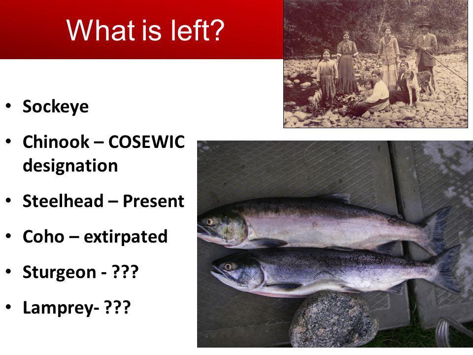 Sockeye Chinook – COSEWIC designation Steelhead – Present Coho – extirpated Sturgeon - ??? Lamprey- ??? What is left?