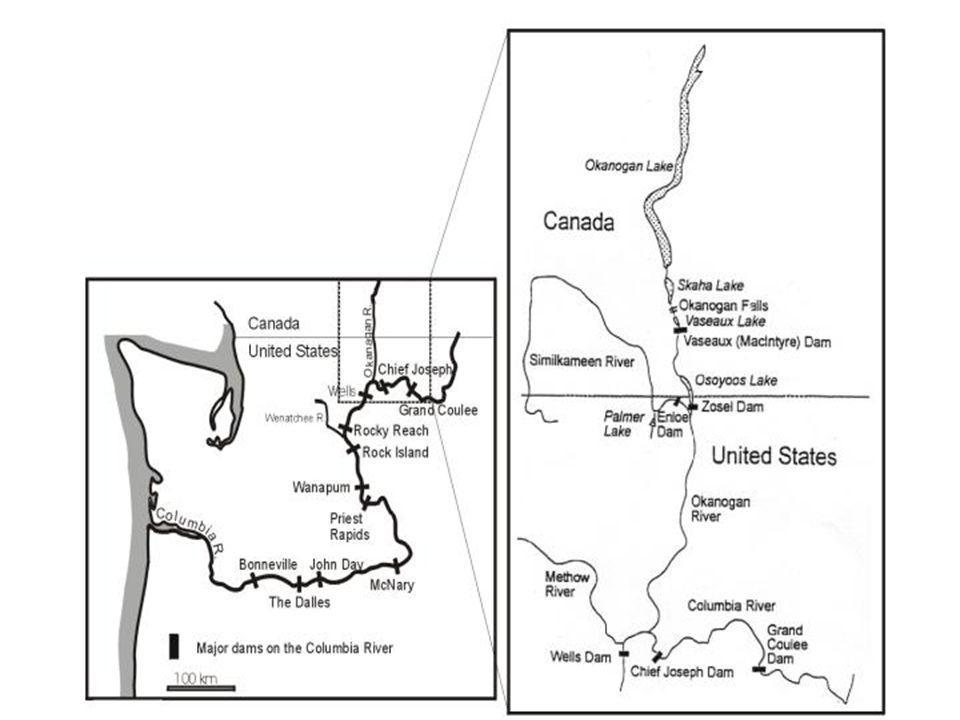 History of Okanagan Sockeye