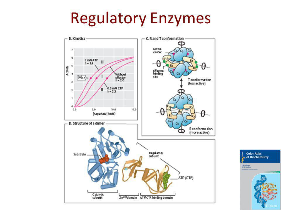 Regulatory Enzymes