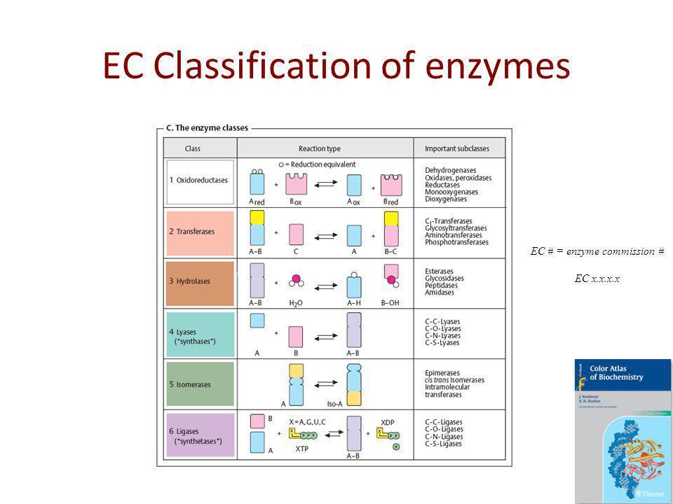 EC Classification of enzymes EC # = enzyme commission # EC x.x.x.x