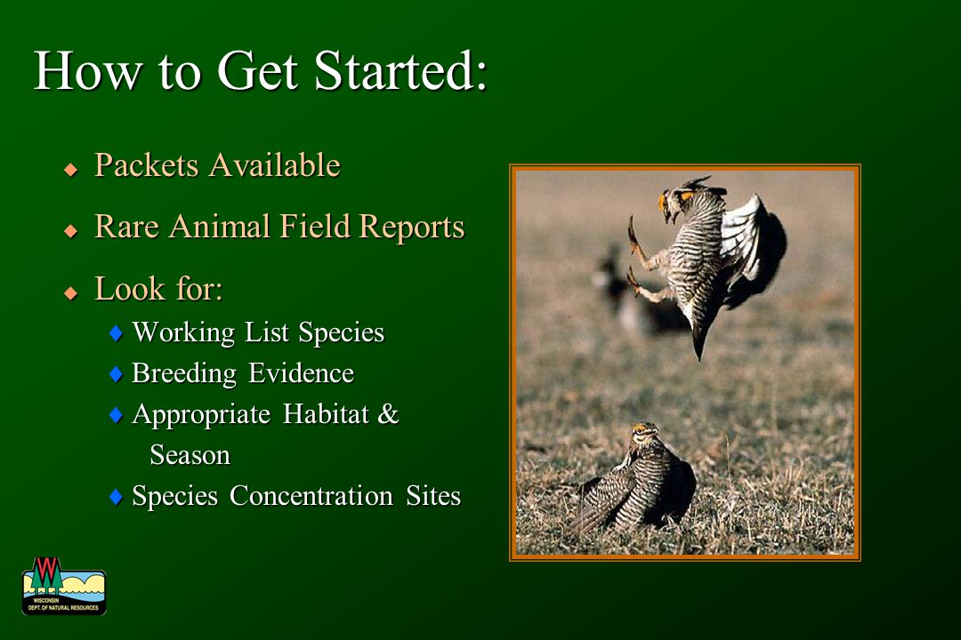 How to Get Started: Packets Available Packets Available Rare Animal Field Reports Rare Animal Field Reports Look for: Look for: Working List Species Working List Species Breeding Evidence Breeding Evidence Appropriate Habitat & Appropriate Habitat & Season Season Species Concentration Sites Species Concentration Sites
