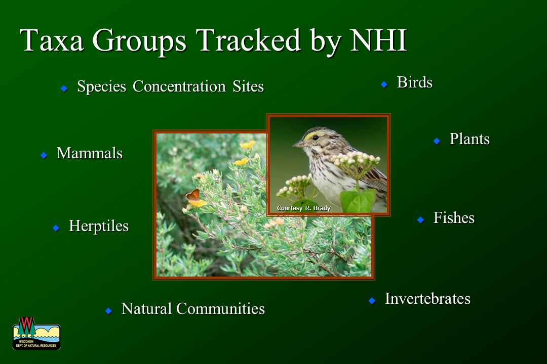 NHI Working List of Rare Birds 83 species currently 83 species currently Last updated in January 2004 Last updated in January 2004 Species that have State/Federal status Species that have State/Federal status