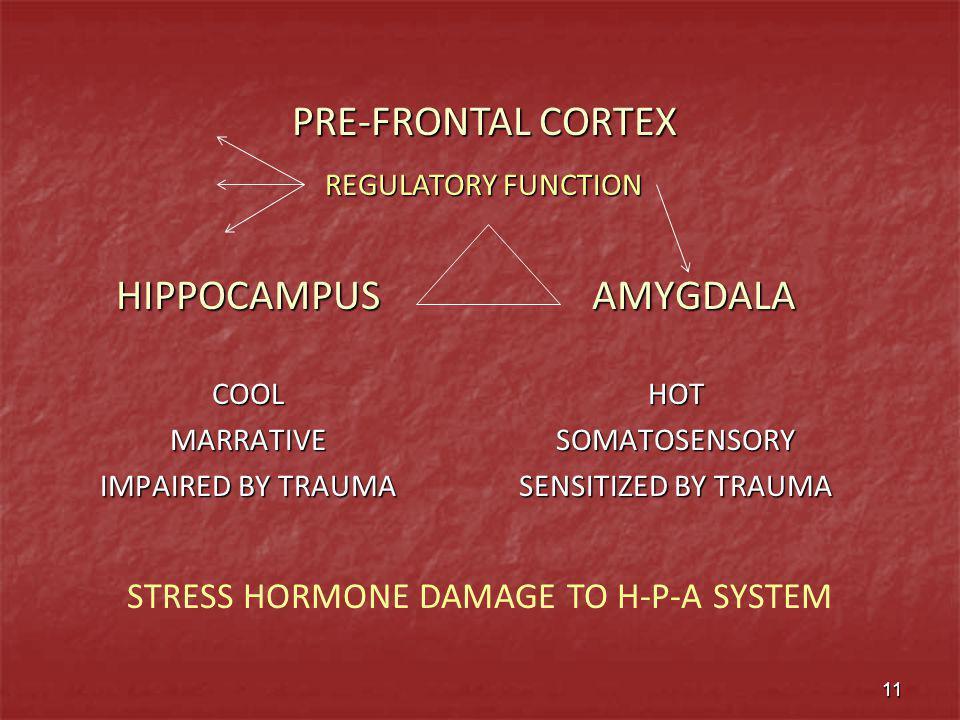 HIPPOCAMPUSCOOLMARRATIVE IMPAIRED BY TRAUMA AMYGDALA AMYGDALA HOTSOMATOSENSORY SENSITIZED BY TRAUMA PRE-FRONTAL CORTEX REGULATORY FUNCTION 11 STRESS H