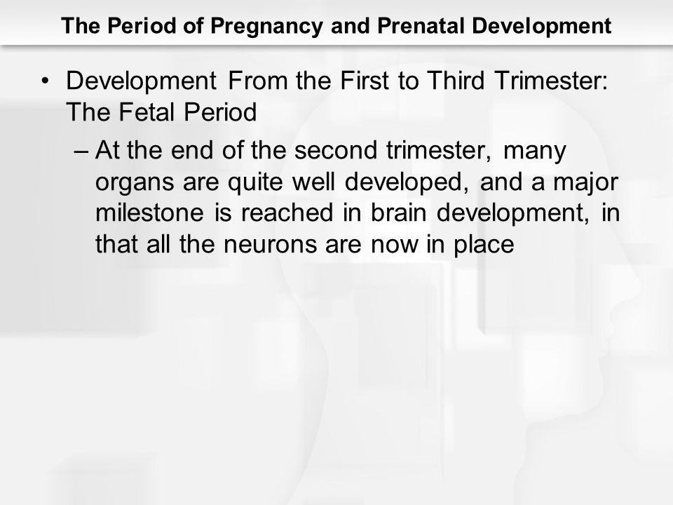 The Period of Pregnancy and Prenatal Development Development From the First to Third Trimester: The Fetal Period –At the end of the second trimester,