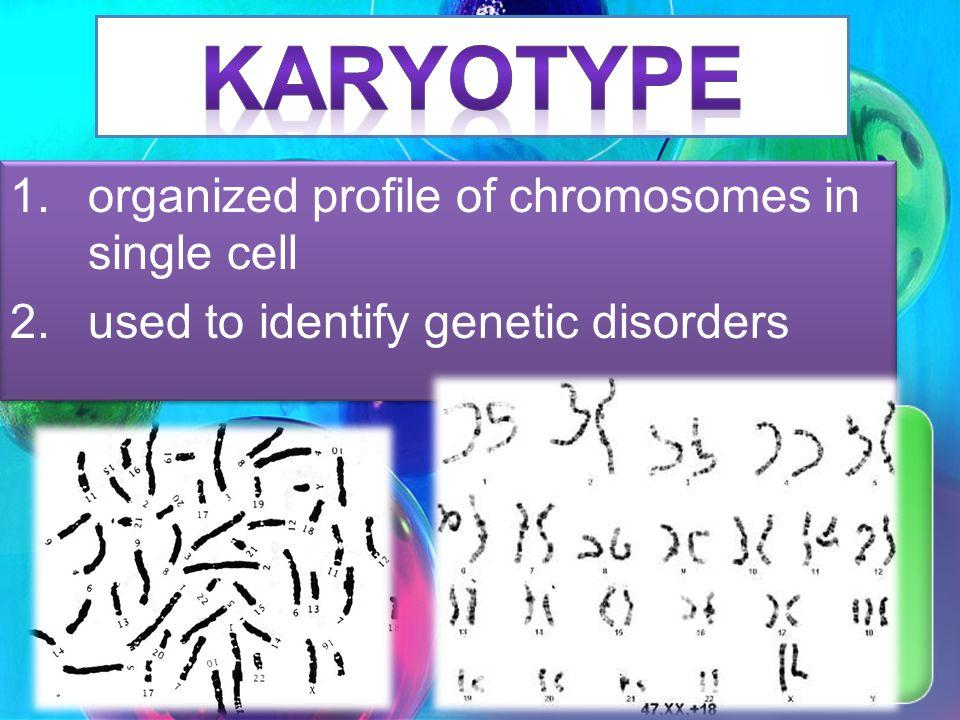 EX. Mrs. Carollos Family Eye Color Trait = Brown Eyes Female with trait Female without trait Male with trait Male without trait