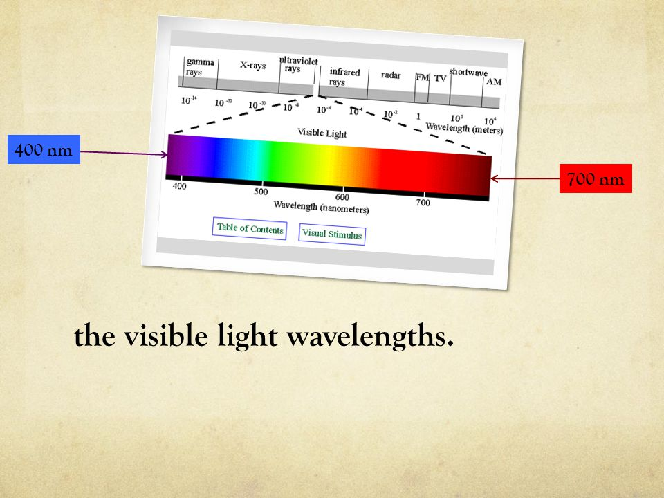 the visible light wavelengths. 700 nm 400 nm