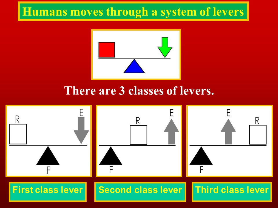 First class lever There are 3 classes of levers. Second class leverThird class lever Humans moves through a system of levers