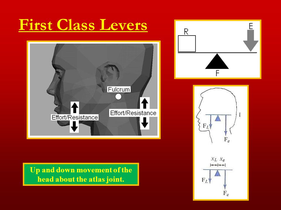 First Class Levers Up and down movement of the head about the atlas joint.