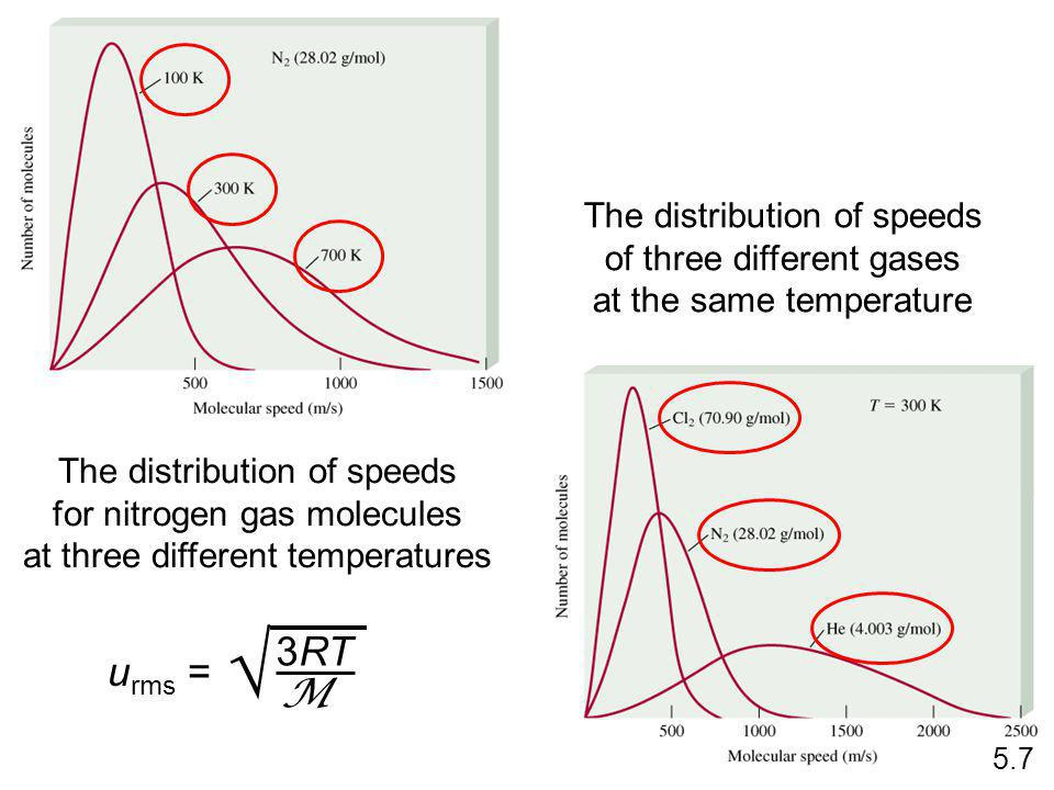The distribution of speeds for nitrogen gas molecules at three different temperatures The distribution of speeds of three different gases at the same temperature 5.7 u rms = 3RT M