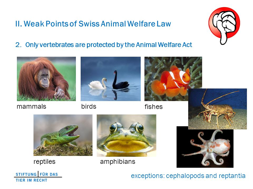 II. Weak Points of Swiss Animal Welfare Law 2.