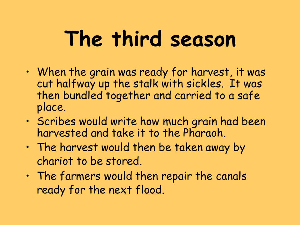 The third season When the grain was ready for harvest, it was cut halfway up the stalk with sickles. It was then bundled together and carried to a saf